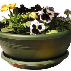 Wie soll man die Gartenpflanzen überwintern?