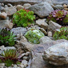 Eigener Steingarten – ein absoluter Hingucker im Garten