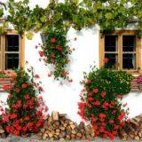 Welche Pflanzen eignen sich für Balkon und Terrasse?